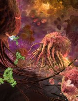 Tumor Death-Cell Receptors on Breast Cancer Cell Credit: Emiko Paul, Quade Paul, Echo Medical Media; Ron Gamble, UAB Insight