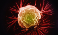 A false-colour electron micrograph image of a breast cancer cell.